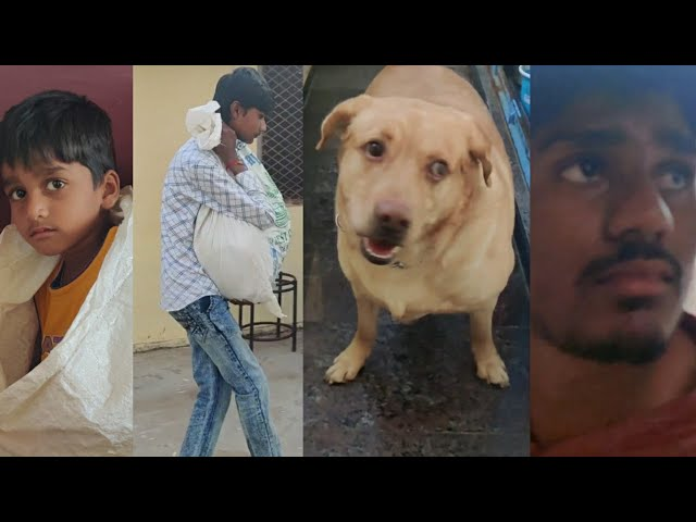 #Upendra_gani#viral#dog#savechild|||||| search dog help with search for missing child||telugu vlog